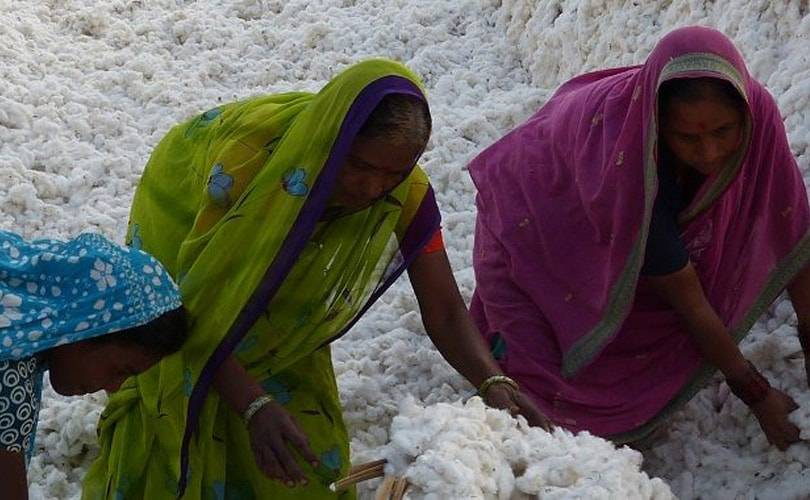 Prosperity Textile shifts to Better Cotton