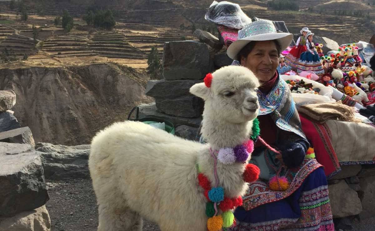 """Sustainability and alpaca are synonyms,"" says Director of Trade Commission of Peru in New York"